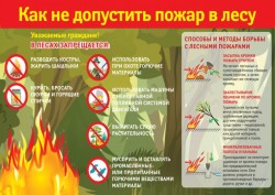 pamjatka-prebyvanija-grazhdan-v-lesah-rf-2.jpg